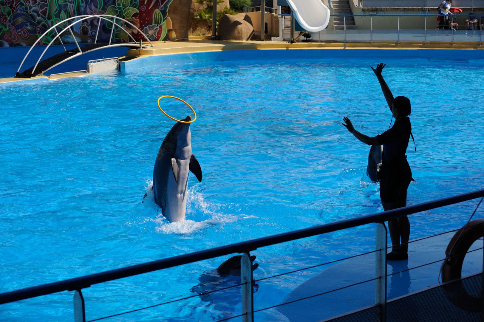 Parc zoologique marin de Marineland: spectacles d'orques ...