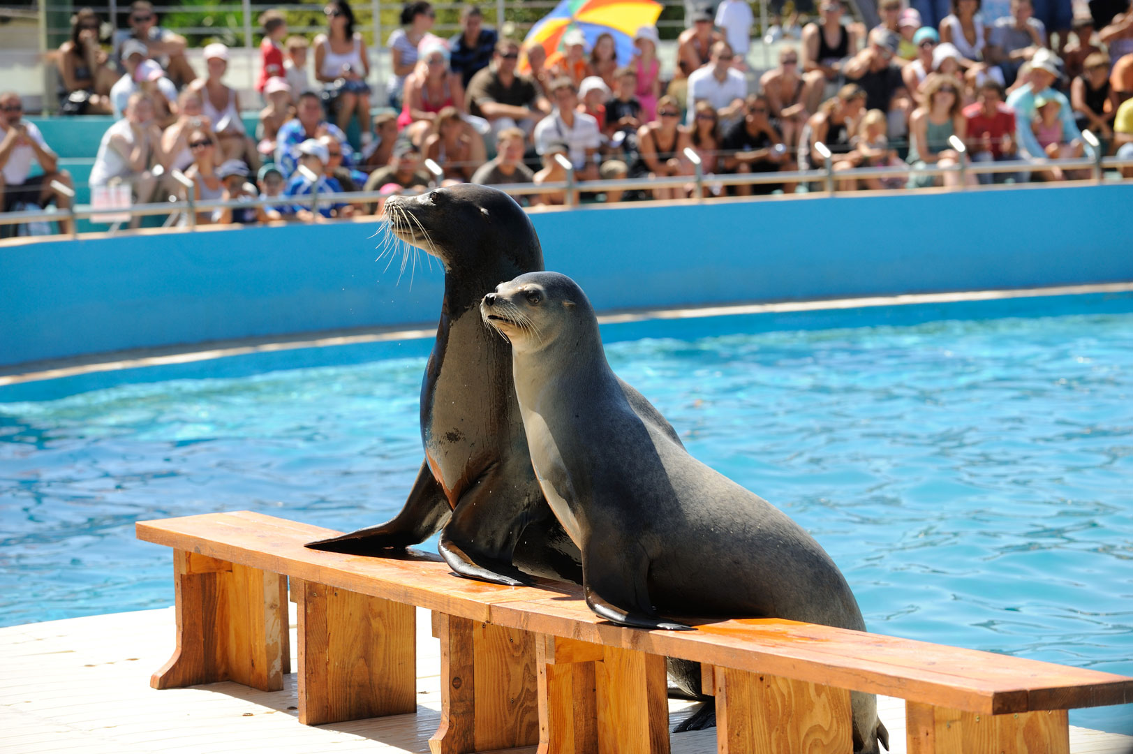 Spectacle des otaries à Marineland